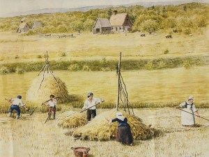 Acadians Saltmarsh Haying